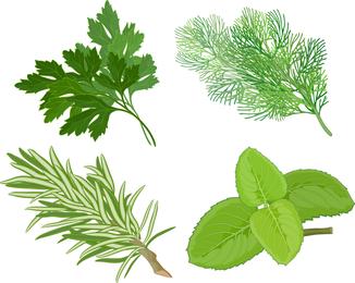 Herbal Leaves 04 Vector
