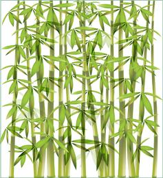 Bambus-Vektor-Illustration