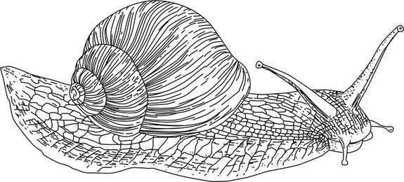 Vector Snail