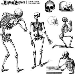 Cráneos y esqueletos humanos