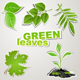Fine Leaf Label 02 Vector