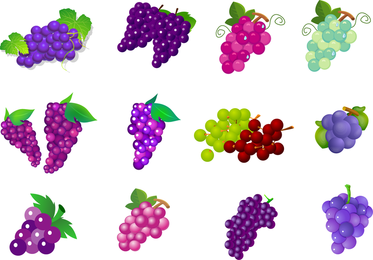 Fruit Of Grapes Vector