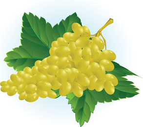 Free Grape Vector Illustration