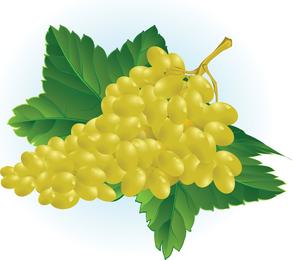 Ilustración de vector de uva gratis
