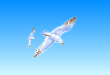 Exquisite Seagull Vector