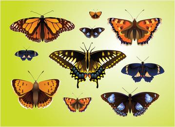 Mariposa realista vectores