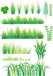 Vector de planta de hierba de bambú