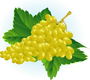 Vector de frutas 3