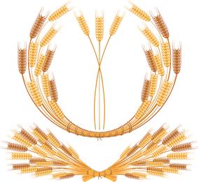 Vetor de trigo amarelo 05