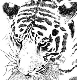 Vetor de imagem 16 de tigre