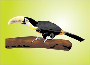 Vector de tucán