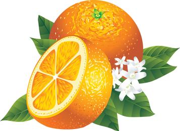 Ilustración naranja realista