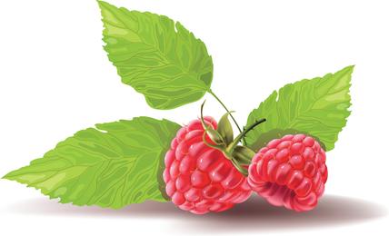 Algunos vectores de frutas rojas