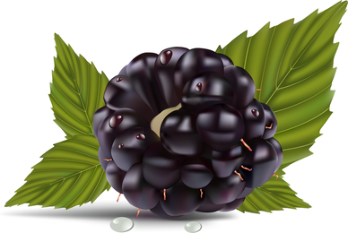 Sabrosas uvas realistas con hojas.