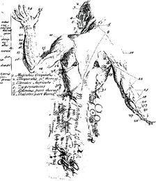 Ilustración del cuerpo anatómico vectores