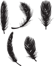 Isolated feather illustration set