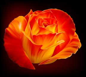 Rosas vector 3