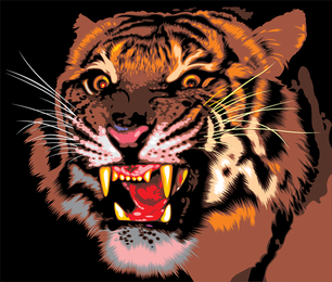 Tiger Image 09 Vector