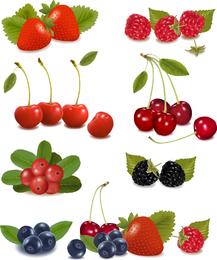 Isolated realistic fruits illustration