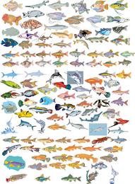 Gran colección de vectores de diferentes peces
