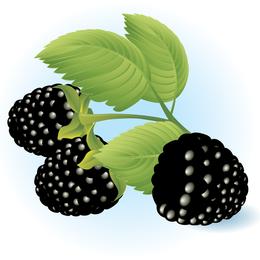 Ilustración de vector libre de Dewberries