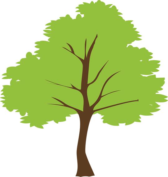 tree vector vector download birch tree vector background birch tree vector graphic