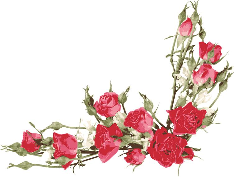 Rosa Bouquet 04 Vector