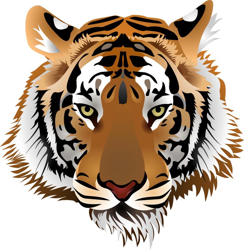 Tiger Image 03 Vector Vector Download