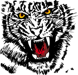 Tiger Image 27 Vector