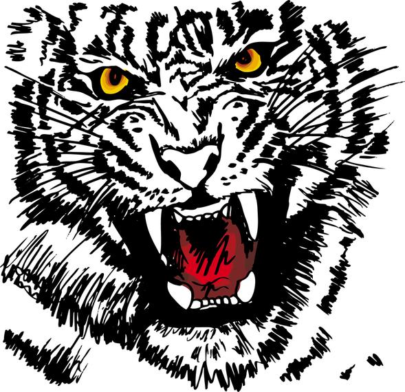 Tiger Image 27 Vector