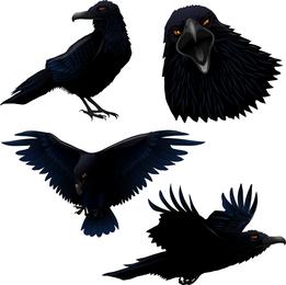 Conjunto de corvo ilustrado