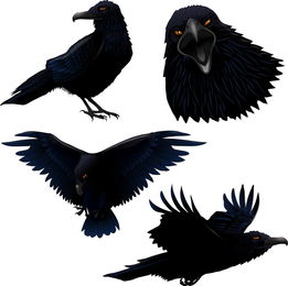 Illustrated crow set