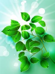 Bela luz verde folhas de vetor