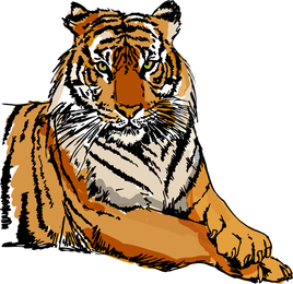 Tiger Image 34 Vector