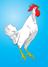 Vetor de frango