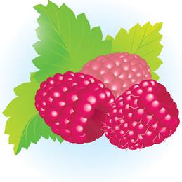 Ilustración de vector de frambuesas gratis