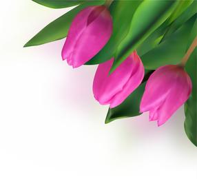 Bright Tulips 04 Vector