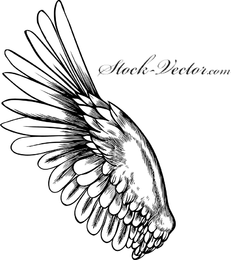 Free Vector Angel Wing