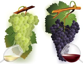 Vinho e uvas vector 2 2