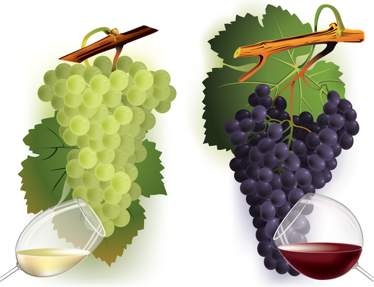 Wine And Grapes Vector 2 2