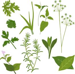 Herbal Leaves 01 Vector