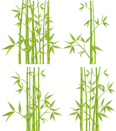 Green bamboo illustration set