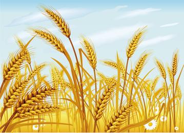 Wheat Vector 2