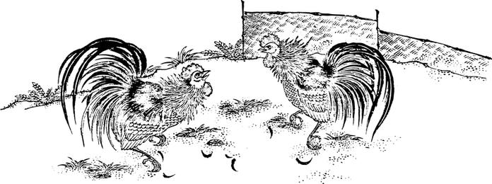 Gallo comer arroz mapa vectorial