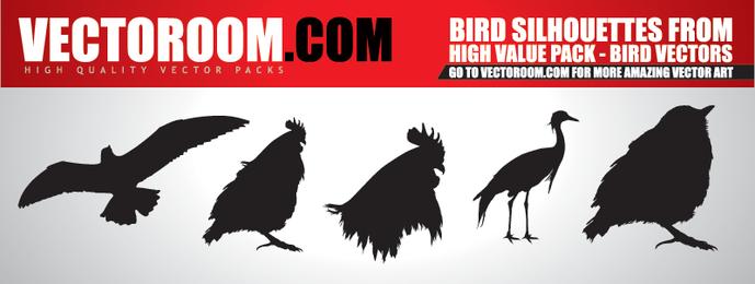 Vectores de aves - Descargar