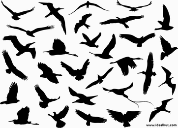 Flying Birds Vector Silhouettes