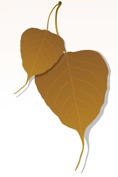 Close-up of Peepal Leaf
