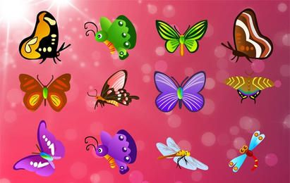 12 different butterflies