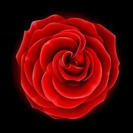 Rosa vermelha de flor completa realista