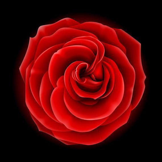 Realista flor llena rosa roja